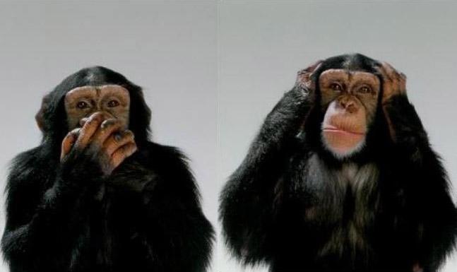 En el Networking o eres mudo o sordo, tu eliges